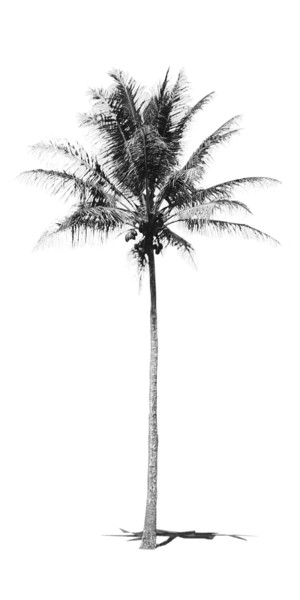 palm BW vertical crop