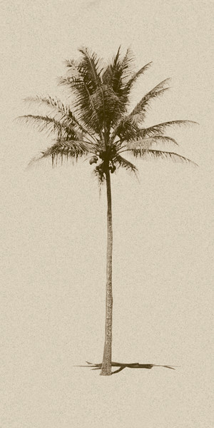 Sepia palm vertical crop