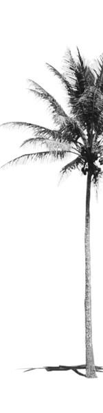 palm BW offcenter vertical crop