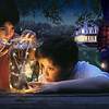 The Firefly Catchers