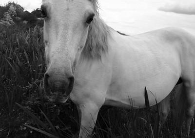 Connemara Ponies 3, Roundstone