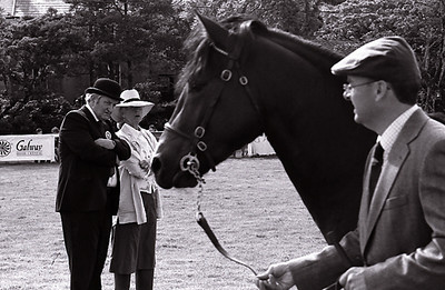 In the Judge's Ring, Connemara Pony Show, Clifden