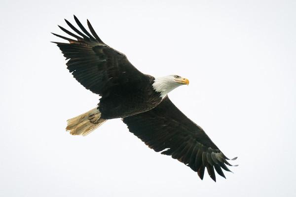 Conowingo Eagles - Stan, Saul & Doug