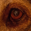 """Dante's Vision"" Dgrin Challenge #97 Eyes"