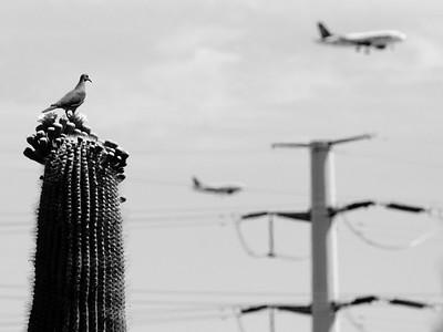 Phoenix, AZ.