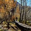 Fall Trees at Convict Lake near Mammoth Lakes California 4