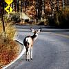 Deer Watching me take his photo at Convict Lake near Mammoth Lakes Calilfornia