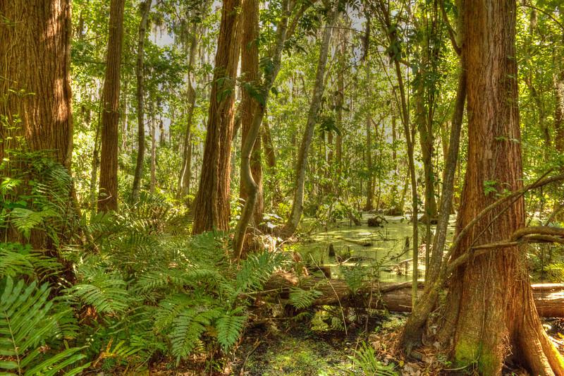 Swampland (Enhanced)