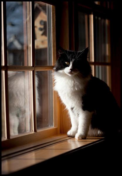 McLir doing a little bird watching