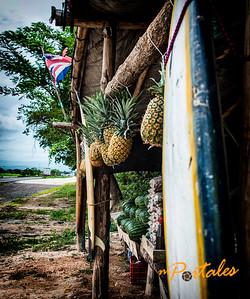 pipas frias aqui..  translation: cold coconut here...