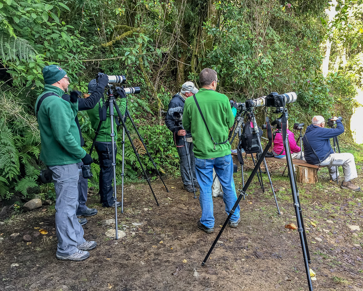 Resplendent Quetzal nesting tree