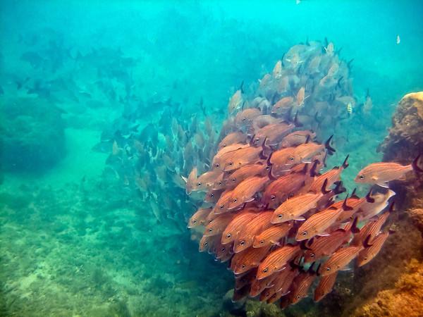 Unidentified School of Fish