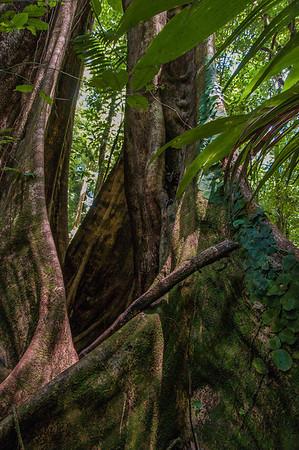 Tree Roots Study