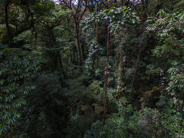 Monteverde Bridge View