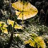 Monteverde_copyright
