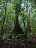 Corcovado Rain Forest