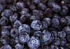 A bunch of blueberries with water drops