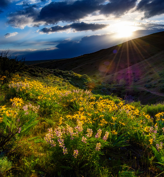 Sunset Spring Boise Foothills