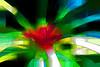 Bromeliad 10 - Photoshop Ink Outlines over Topaz Simplify Line and Ink IV preset<br /> <br /> Tropical Dome, Conservatory, Hidden Lake Gardens, Michigan<br /> Taken December 20, 2014