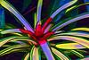 Bromeliad 15 - Photoshop Stamp over Topaz Simplify Cartoon preset<br /> <br /> Tropical Dome, Conservatory, Hidden Lake Gardens, Michigan<br /> Taken December 20, 2014