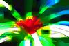 Bromeliad 13 - Topaz Simplify Color Sketch preset, , all over Topaz Simplify Line and Ink IV preset<br /> <br /> Tropical Dome, Conservatory, Hidden Lake Gardens, Michigan<br /> Taken December 20, 2014