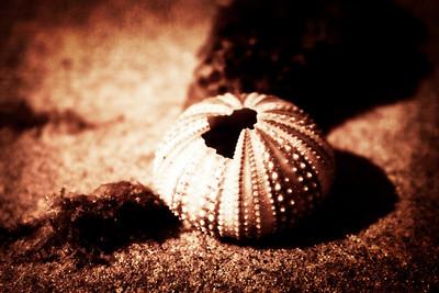 solo en la arena
