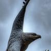 UNT Eagle