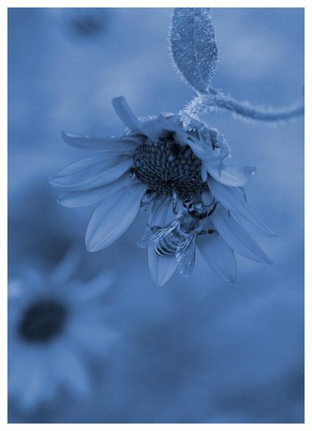 Cool Bee~