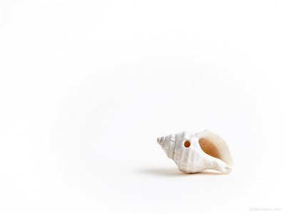 "S - ""Solitary Sea Shell"""