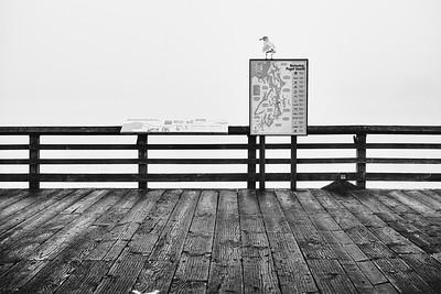A seagull sits atop a park sign on a foggy morning at Alki Beach