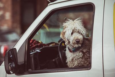 Dog seen in Fairhaven, WA.