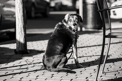 Friendly, Old Dog