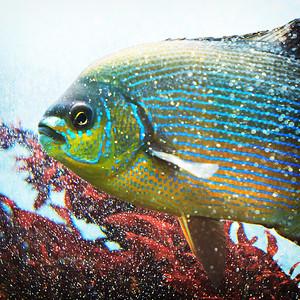 Seattle Aquarium III