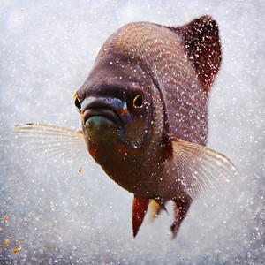 Seattle Aquarium II