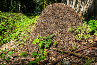 Formica Ant Nest