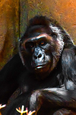 The Great Ape