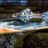 Newport Aquarium - Cincinnati