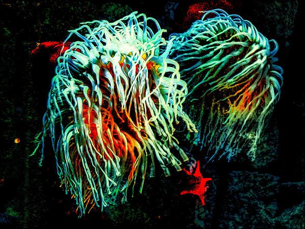 Double Sea Anemone