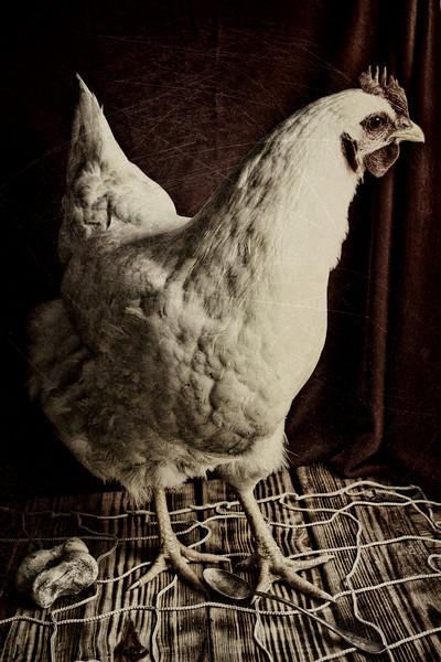 Chicken #1