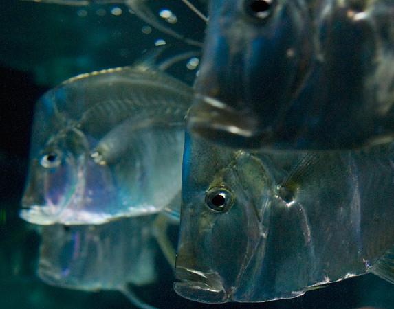 Oregon Coast Aquarium. Newport.