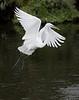 White Egret. Gatorland in Orlando, Florida.