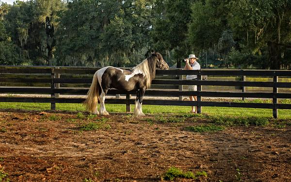 Larry Jordan shoots a gypsy vanner horse at Gypsy Gold Farms, Ocala, Florida.