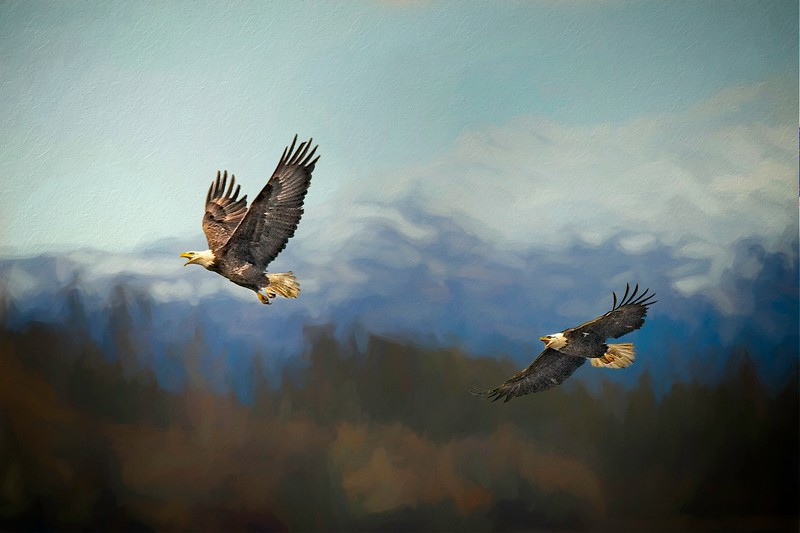 Eagles Playing Tag