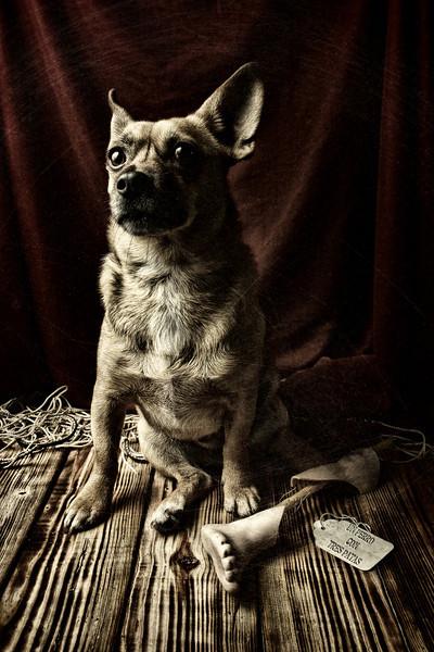 Un Perro con Tres Patas
