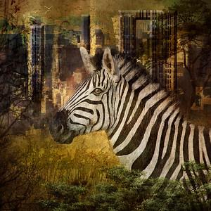 Striped Wonder
