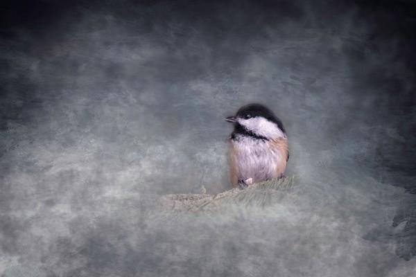 Cute Little Chickadee
