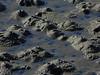 Lugworm Borough (Castings) <em>Arenicola braziliensis</em> Crown Beach, Alameda, Alameda Co., CA 1/4/2012
