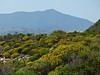 <em>Eriophyllum Staechadifolium, </em> Brooks Island, Contra Costa Co., CA 2012/05/06