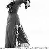 Flamenco Ecos #721
