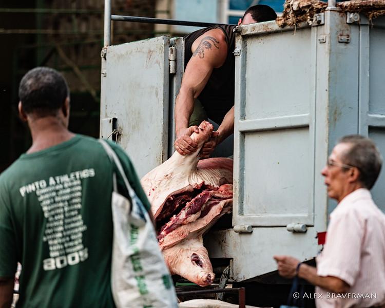 unloading pigs #193